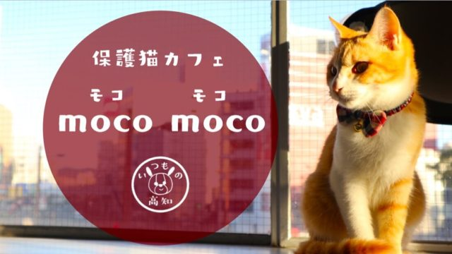 moco-mocoのにゃんこ