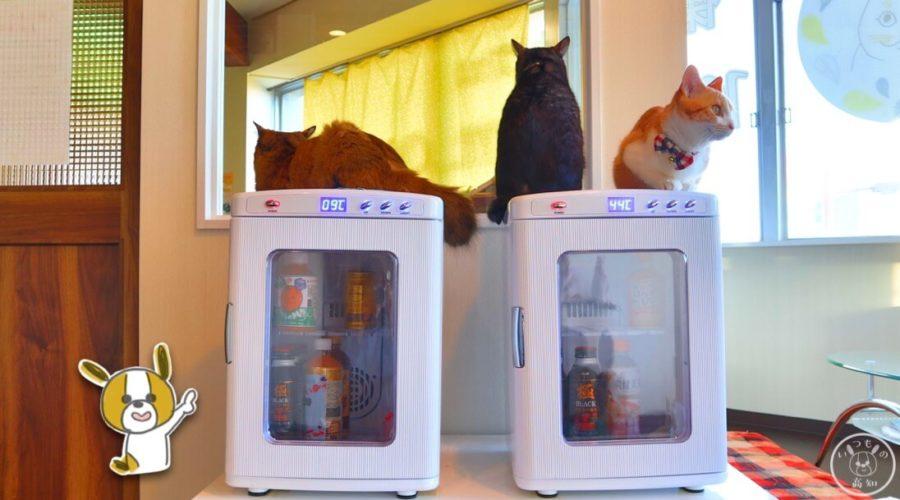 保護猫カフェmoco mocoのにゃんこ達