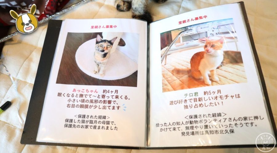 保護猫カフェmoco mocoのにゃんこスタッフのご紹介
