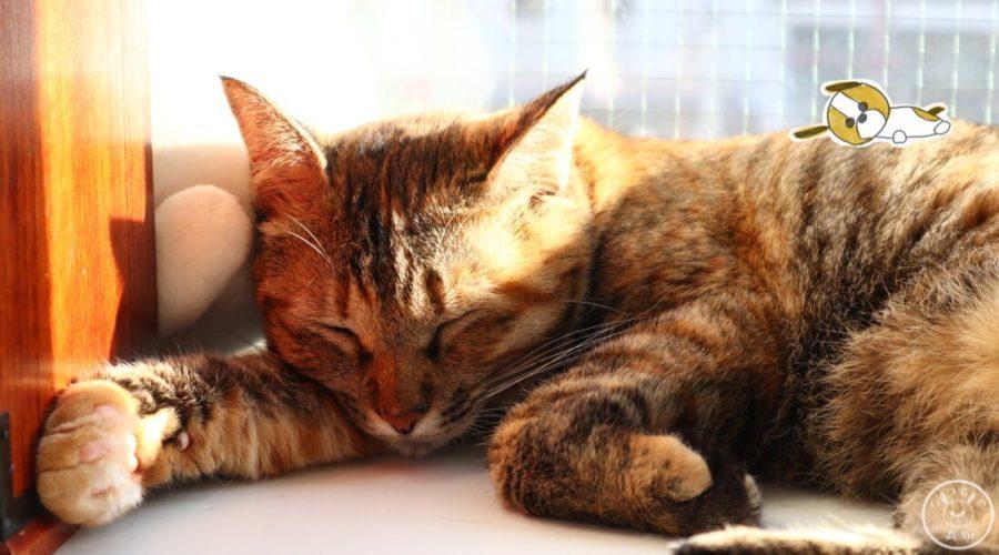 保護猫カフェmoco mocoの日向ぼっこにゃんこ