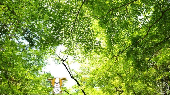 五台山竹林寺の新緑