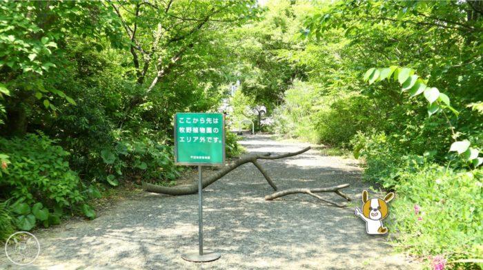 行き止まりの木