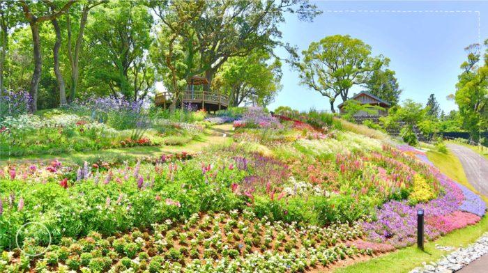 牧野植物園のこんこん山広場