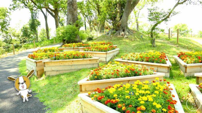 こんこん山広場の季節のお花