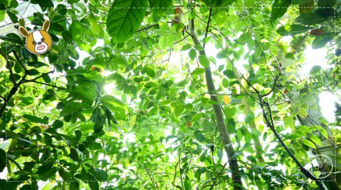 温室の植物