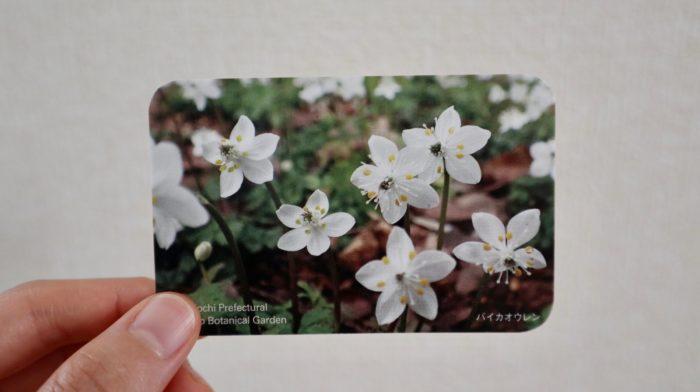 牧野植物園の年間入園券