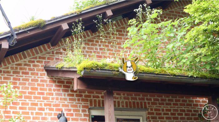 めだか池ギャラリーの屋根の上の猫