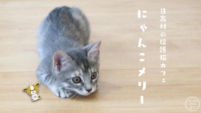 日高村の保護猫カフェにゃんこメリー
